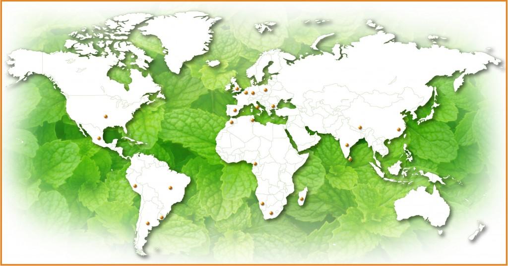 Plantes_MAP