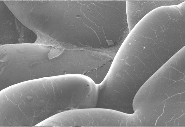 granulés-de-fibre-soluble-2