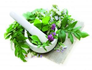 Fournisseur extraits plantes